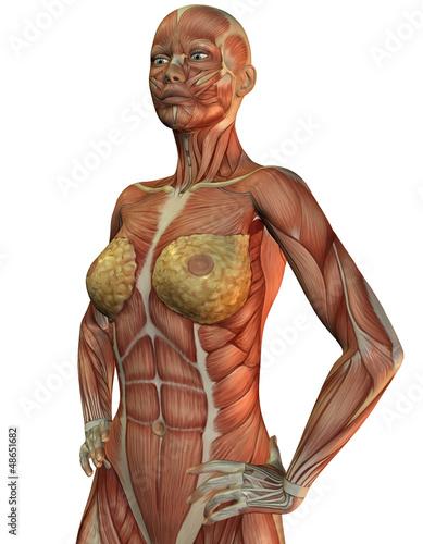 Anatomie und Muskeln einer Frau\