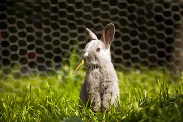 Obraz króliczek - fototapety do salonu