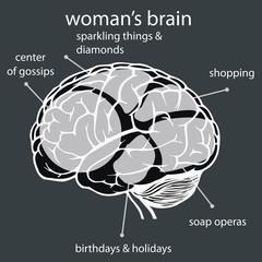 concept woman's brain