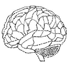 vector human brain model