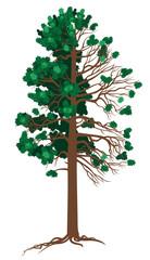 Vector Cedar