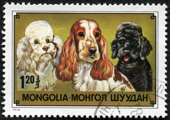 stamp printed in Mongolia showing Cocker Spaniel and Poodle
