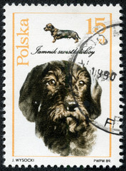 stamp printed in Poland shows Smooth-haired Dachshund