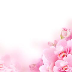 Blossom - pink flower, floral background