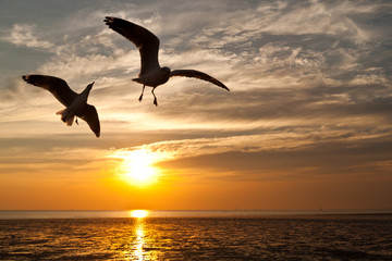seagull with sunset in the background Wall mural