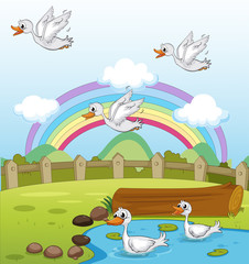 Wall Murals River, lake Ducks and a rainbow