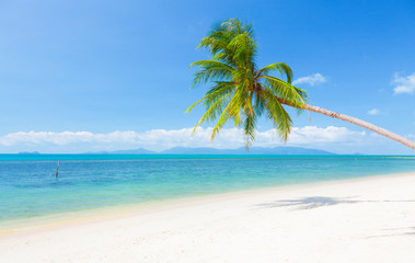 beautiful beach with coconut palm and sea