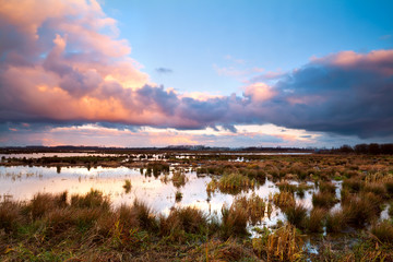 swamp at dramatic sunrise