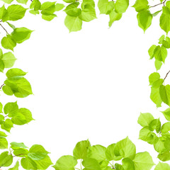 Green leaves frame isolated on white, border and background