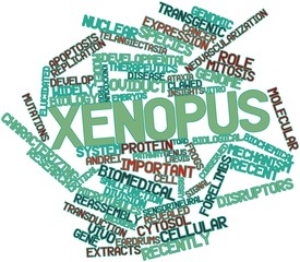 Word cloud for Xenopus