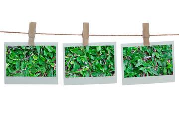 Polaroid templates with green grass