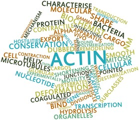 Word cloud for Actin