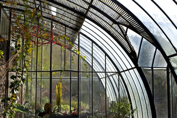 Véranda, serre, jardin, plantes, maison, jardinage, vert