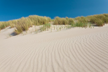 Sand dunes with grass in The Netherlands