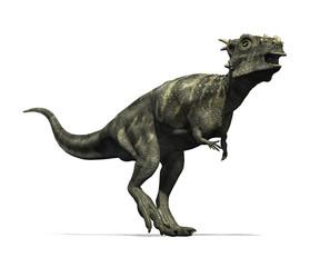 Dracorex Dinosaur