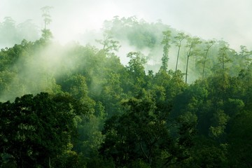 Deurstickers Jungle Morning misty tropical forest