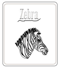 Zebra. Hand drawn sketch illustration isolated on white backgro
