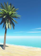single palm on the beach