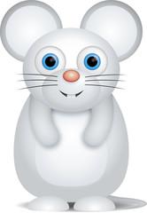 kleine weiße Maus