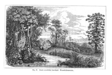 Urweltliche Flusslandschaft (Alte Lithographie)
