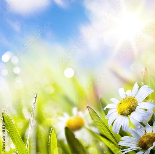 солнце лето на белом фоне