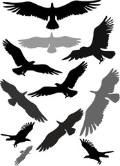 Set of silhouettes of flying eagles