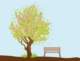 Beautiful sakura and bench
