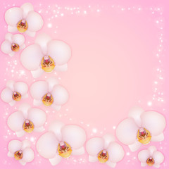 Orchids on a pink background with patches of light