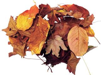 foglie secche marroni