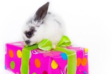geschenk und hase