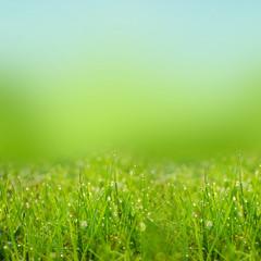 green natute background