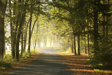 Keuken foto achterwand Bos in mist Forest road in a foggy October morning