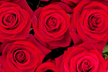 Background of red roses in closeup