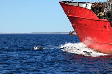 Delfine im Südatlantik