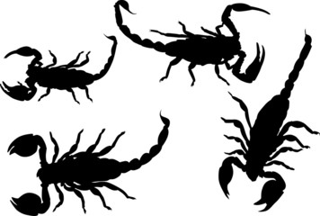 four isolated scorpions