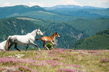 Horses running in mountain wilderness
