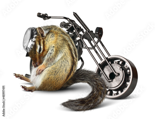 Wall mural Funny chipmunk biker with motorcycle