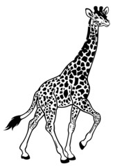 giraffe black white