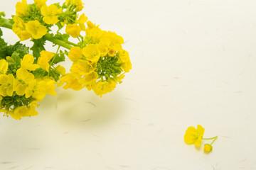 菜の花と和紙