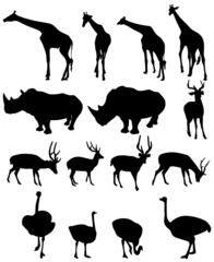 giraffe,rhinoceros, deer,ostrich .vector
