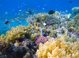 Fotobehang Koraalriffen Coral and fish