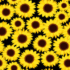 Seamless background with sunflowers. Vector illustration.