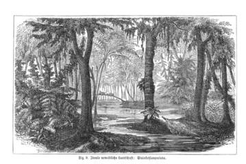 Urweltliche Waldlandschaft (Alte Lithographie)