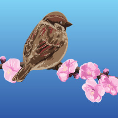 Sparrow on a branch of cherry blossoms - vector illustration
