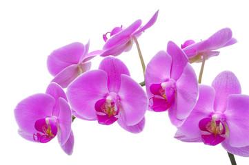 Orchidee Detail Blume Blüte
