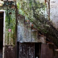 Poster Lama abandoned house