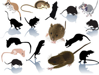 set of rats and mouses on white