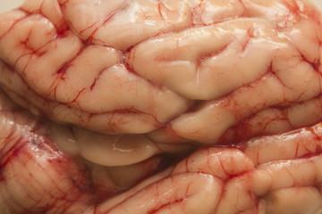 Textura de cerebro