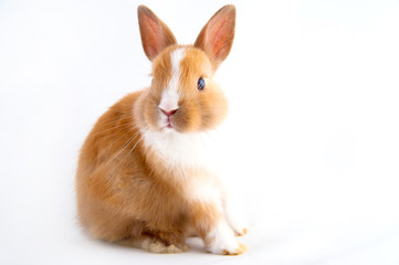 Obraz bunny - fototapety do salonu