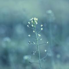 Wall Mural - Meadow Flower